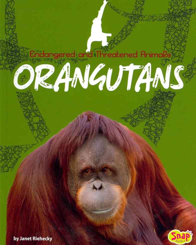 Orangutans By Riehecky, Janet
